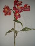 12, Oil Flower