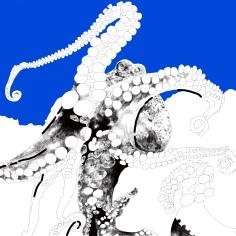 Octopus Study 8