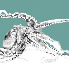 Octopus Study 13